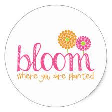 bloomwhereyouareplanted